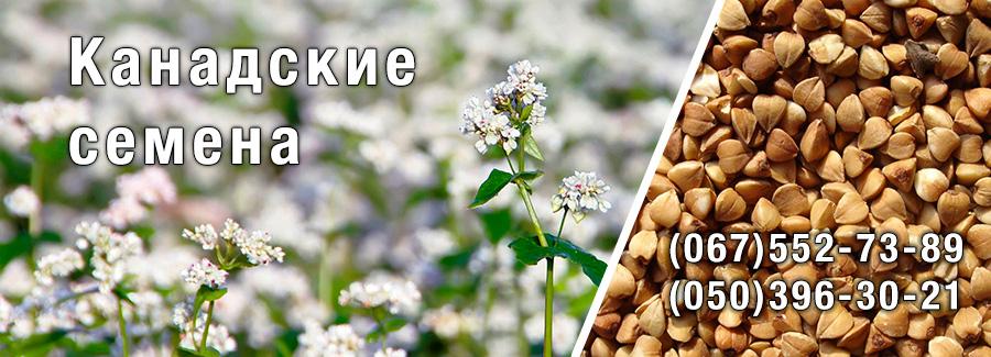 Магазин Канадские семена: посевной материал гречихи, пшеницы, кориандра, подсолнечника
