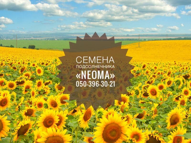 Импортные семена подсолнечника Neoma
