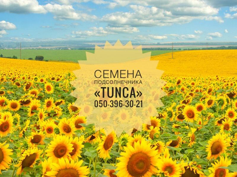 Импортные семена подсолнечника Tunca
