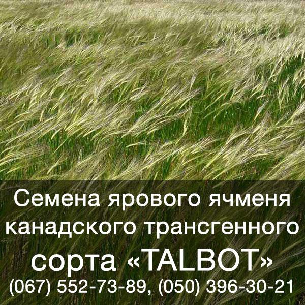 Семена ячменя ярового купить в Украине — Канадский трансгенный ячмень TALBOT (Талбот)
