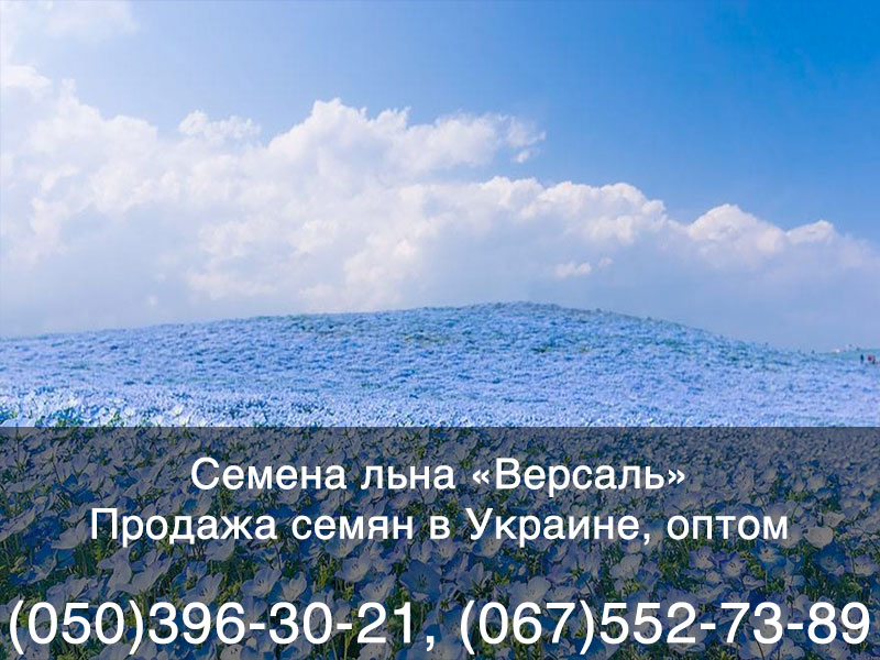 Купить семена льна в Украине — гибрид «Версаль»