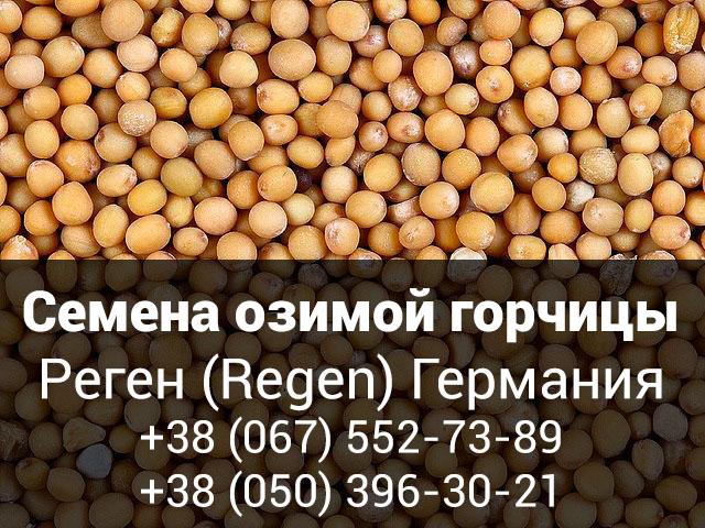 Семена озимой горчицы Реген (Regen) Германия