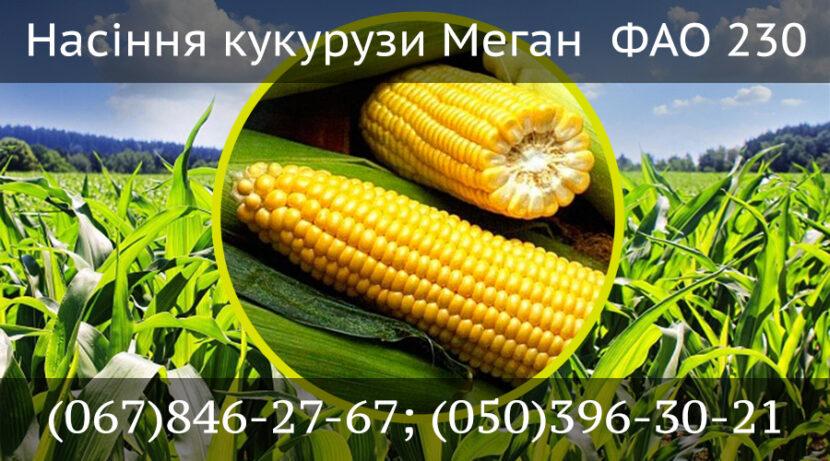 Кукуруза Меган ФАО 230 (Megan) PREMIUM