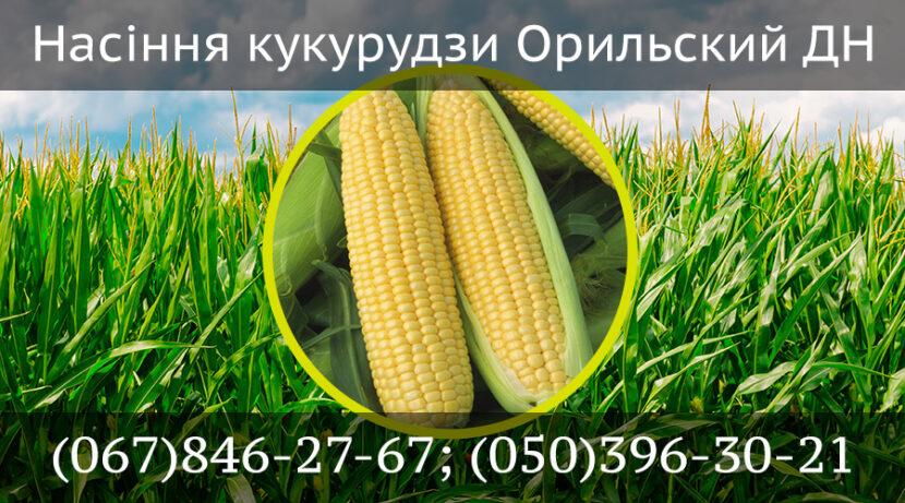 Насіння кукурудзи Орильский ДН